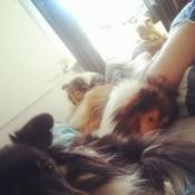 Ile mam futra w łóżku? :-)